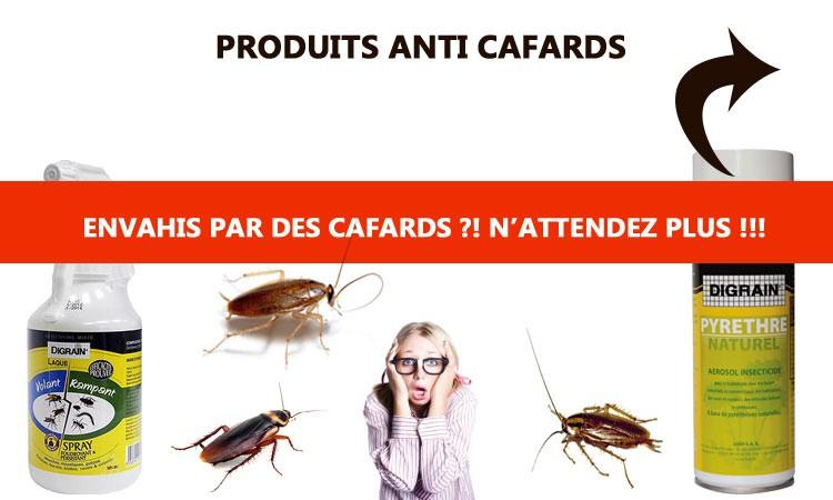 Produit anti punaise de lit kapo for Produit anti cafard